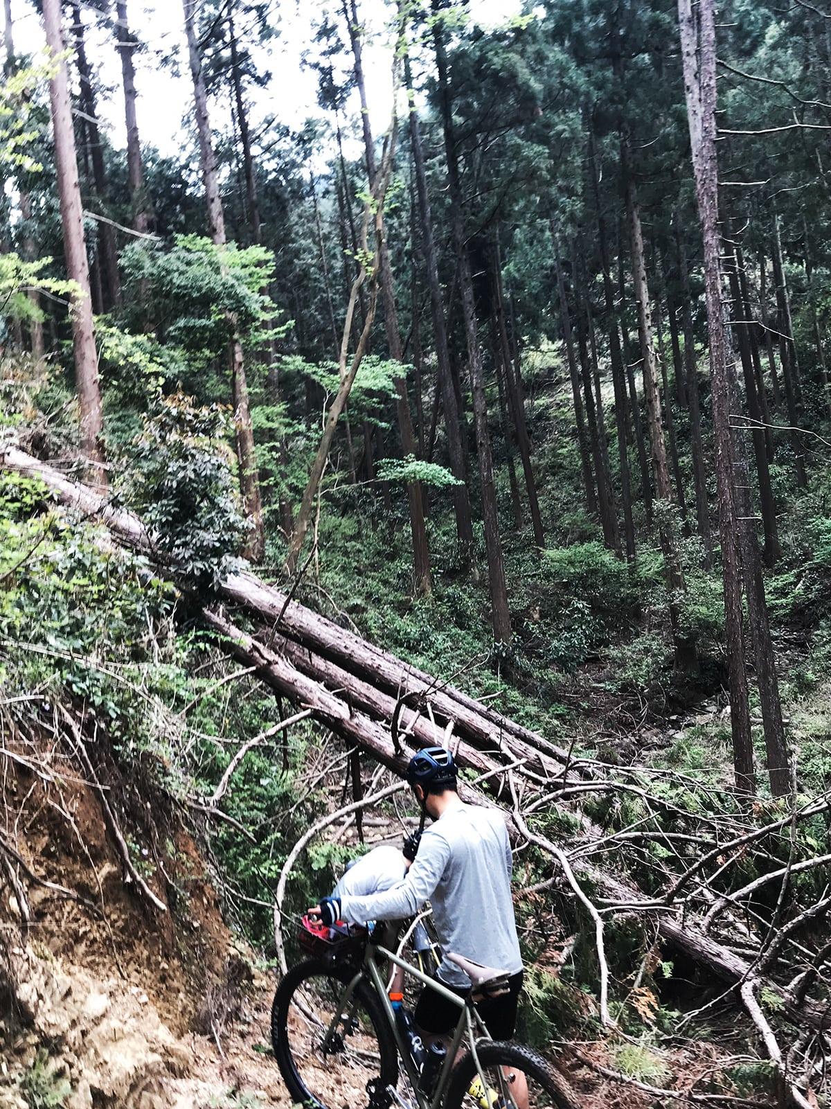 山サイ/木くぐる上から