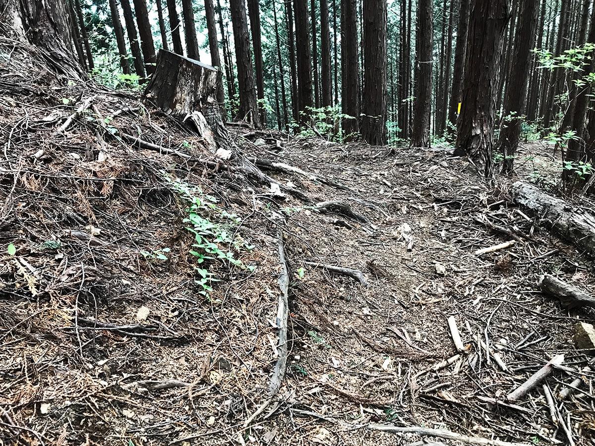 浅間嶺/ウッドチップ